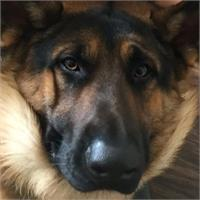 Todd M's profile image